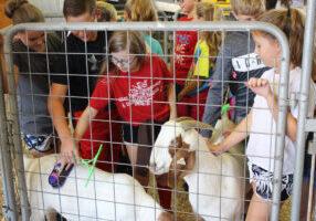 Glen Dale Elementary students brush goats.